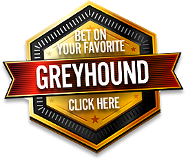 Bet on your favorite greyhound now!